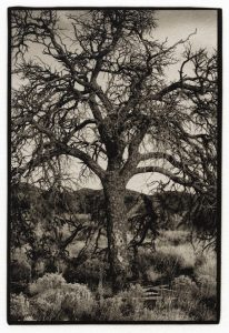 Tree, Santa Fe, New Mexico, 2009